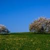 Frühling in der Eifel 1