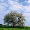 Frühling in der Eifel 3