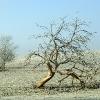 Obstbaum hat ausgedient...