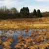 Dürres Maar bei Gillenfeld im Frühjahr
