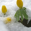 Winterling 3