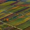 Weinberge in Herbstfarben 2